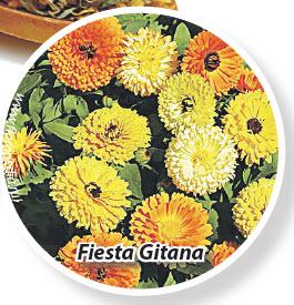 Календула Fiesta Gitana
