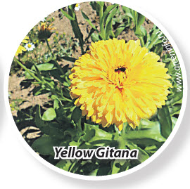 Календула Yellow Gitana